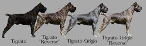 Tigrature